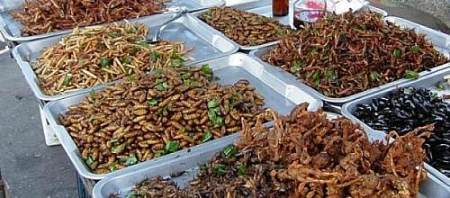 insetti-fritti-small