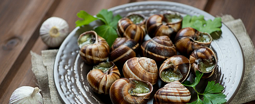 escargot small